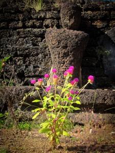 Fleur sauvage, en Thaïlande